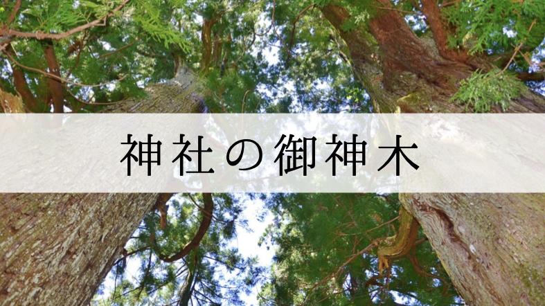 御神木 神社